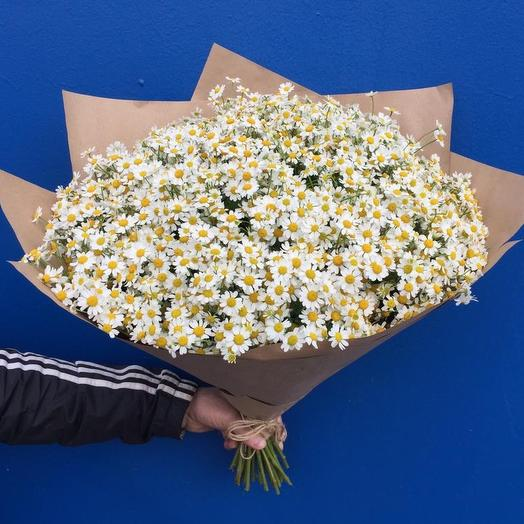 Букет из Ромашик Камилла: букеты цветов на заказ Flowwow