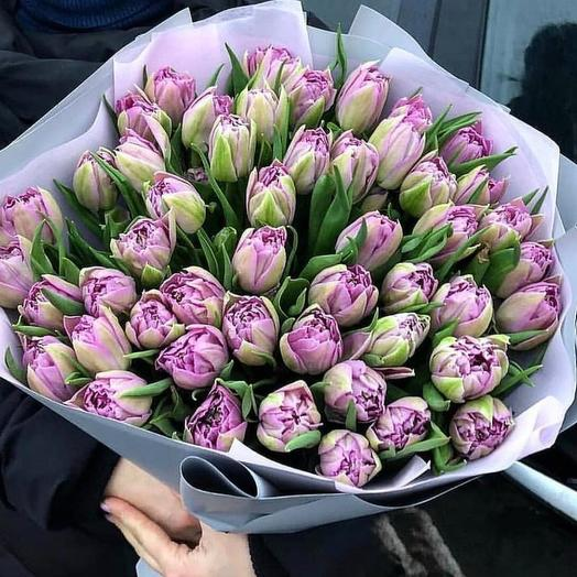 Лиловые тюльпаны 51 шт: букеты цветов на заказ Flowwow
