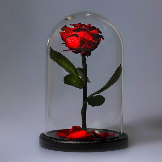 Роза в колбе бордовая премиум: букеты цветов на заказ Flowwow