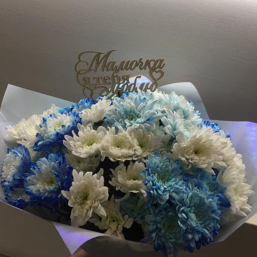 Хризантема голубая