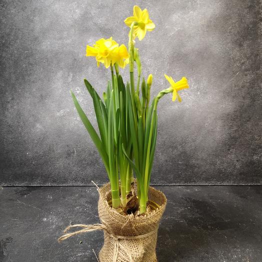 Нарцисс: букеты цветов на заказ Flowwow