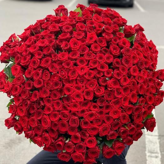 Букет из 151 розы