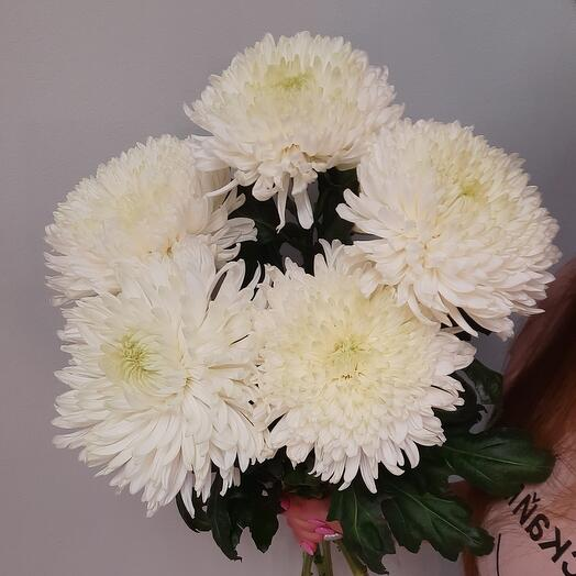 Bouquet of 5 chrysanthemums under the ribbon