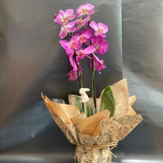 Комнатное растение Орхидея и керамический кролик🌸