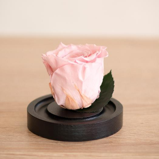 Роза в колбе Микро розовая