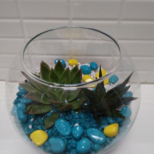 """Флорариум """"Голубая лагуна"""": букеты цветов на заказ Flowwow"""