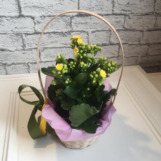 Корзинка с каланхоэ: букеты цветов на заказ Flowwow