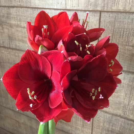 Шикарные амариллисы по супер цене: букеты цветов на заказ Flowwow
