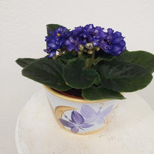 Фиалка в керамической кашпо: букеты цветов на заказ Flowwow