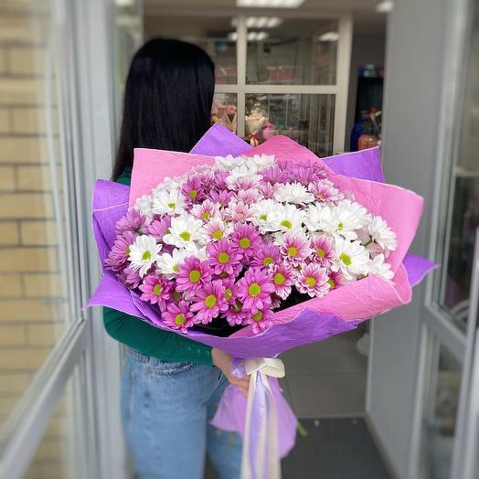 Розовое Облако хризантем