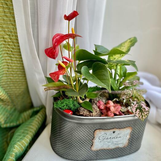 Флорариум с тропическими цветами