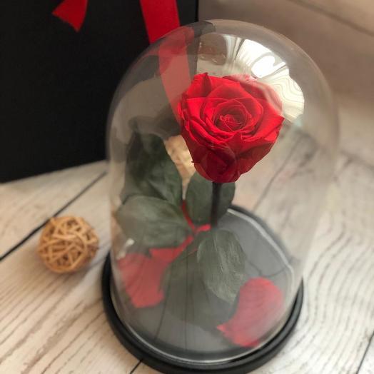 Живая красная роза в колбе: букеты цветов на заказ Flowwow