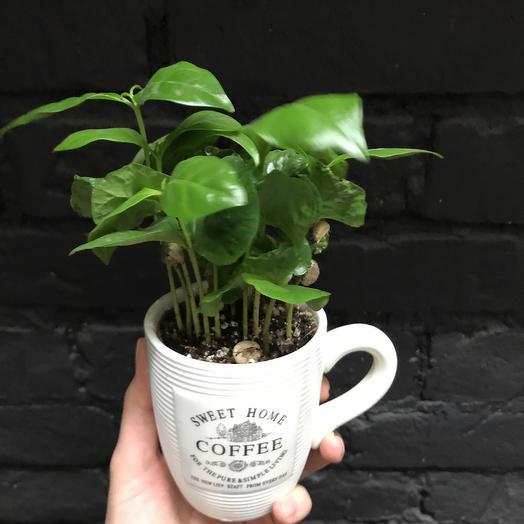 Кофе в кружке: букеты цветов на заказ Flowwow