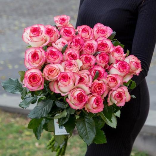 """Roses """"Jumilia"""""""
