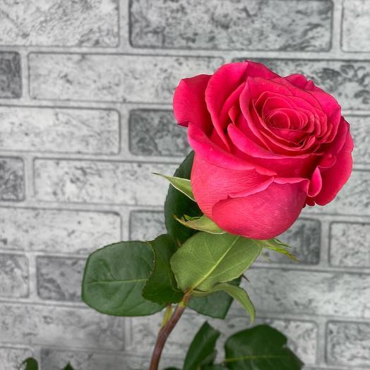 Роза VIP Premium Колумбия
