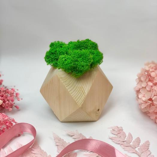 Мох в деревянном кубе