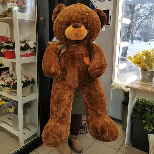 Медведь Большой