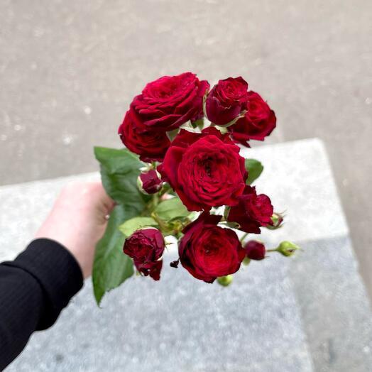 Роза кустовая Кейт Линн 80см