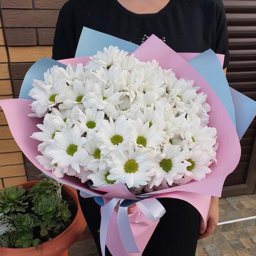 Ромашковая хризантема