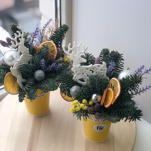 Стаканчик с натуральной голубой елью: букеты цветов на заказ Flowwow