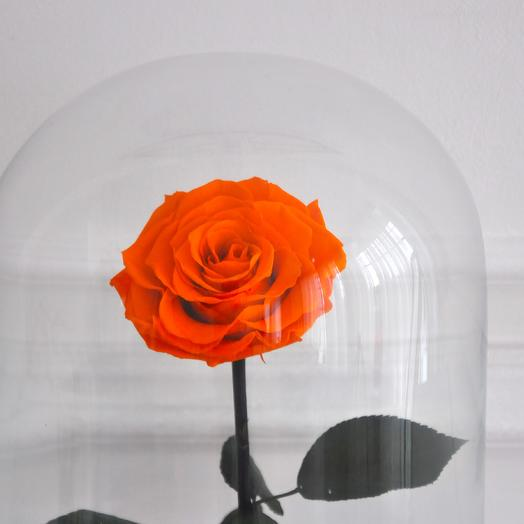 CLOCKWORK ORANGE, ОРАНЖЕВАЯ РОЗА В КОЛБЕ KING SIZE: букеты цветов на заказ Flowwow