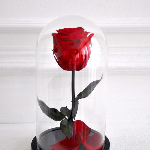 Роза в колбе мини Королевский Красный