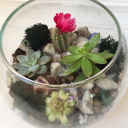 Флорариум «Аленький цветочек»: букеты цветов на заказ Flowwow