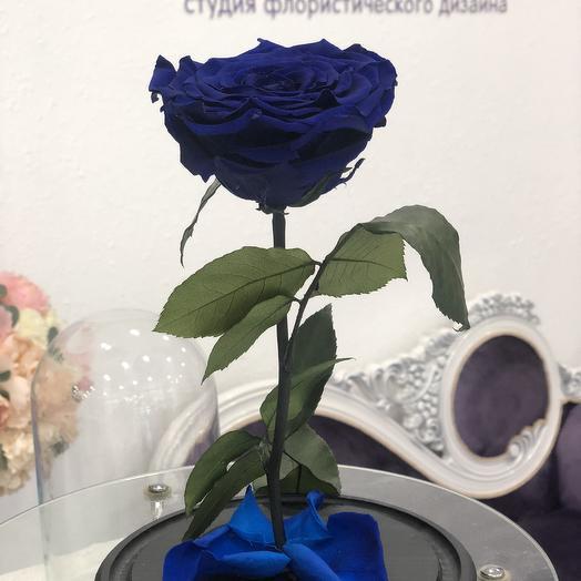 Роза синяя стабилизированная