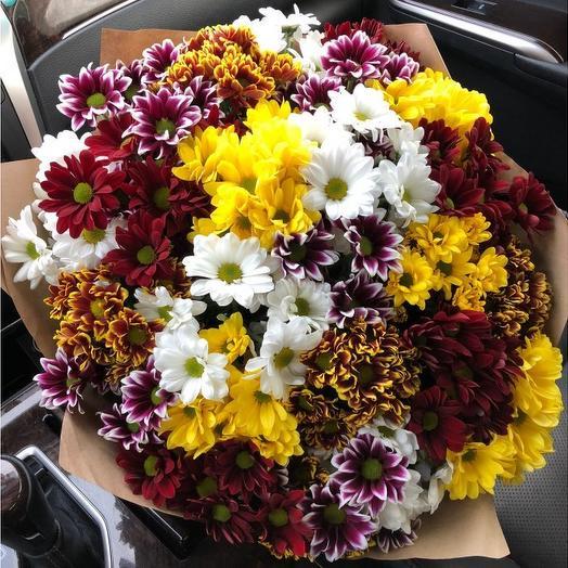 "Букет хризантем ""Бургунди"": букеты цветов на заказ Flowwow"