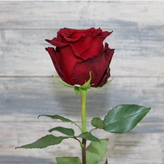 Красная роза Эквадор