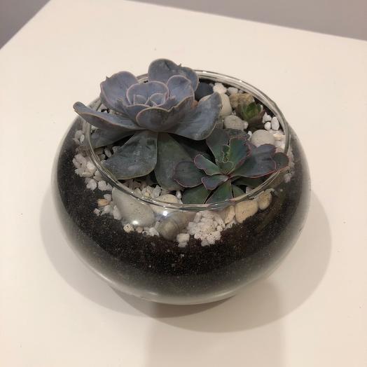 Сукуленты во флорариуме