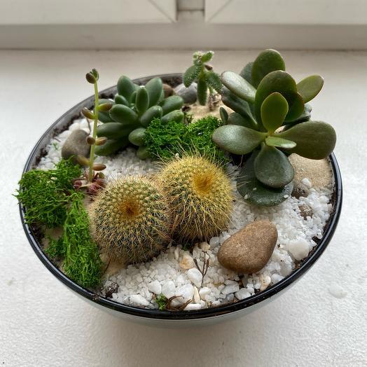 Флорариум «смешной кактус»