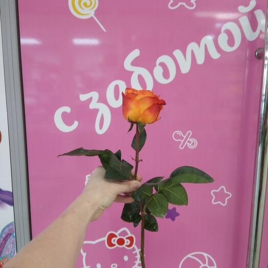 Роза Хай Мейджик 50 см