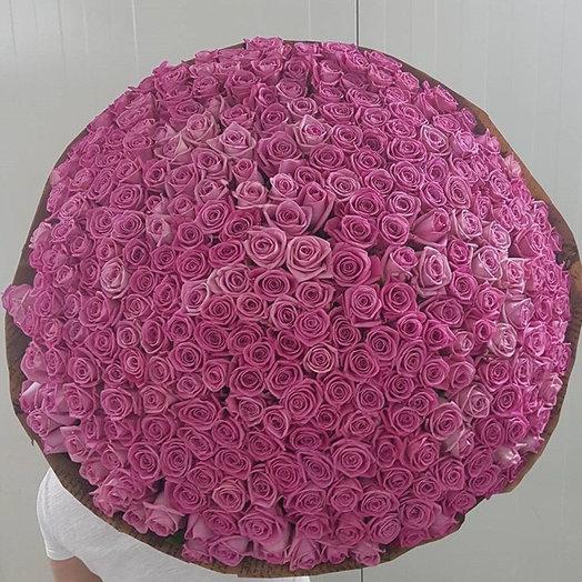 351 розовая роза