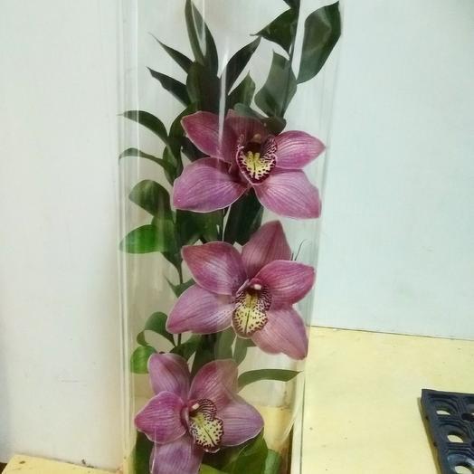 Композиция из орхидей: букеты цветов на заказ Flowwow