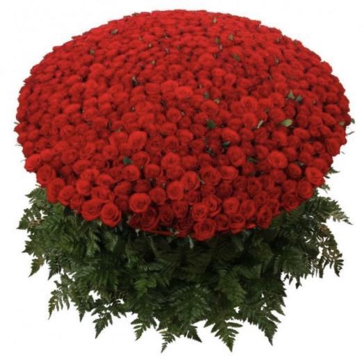 501 роза Рэд Наоми: букеты цветов на заказ Flowwow