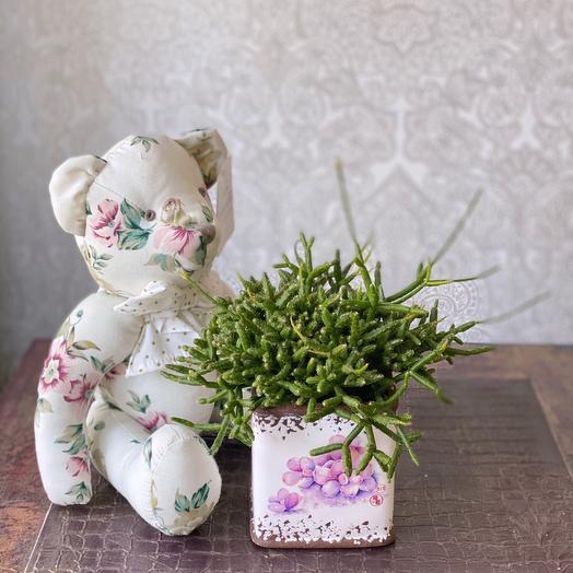 Рипсалис с мишкой: букеты цветов на заказ Flowwow