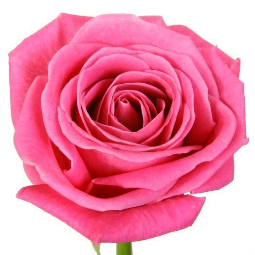 Розовые подмосковные розы Аква 60 см