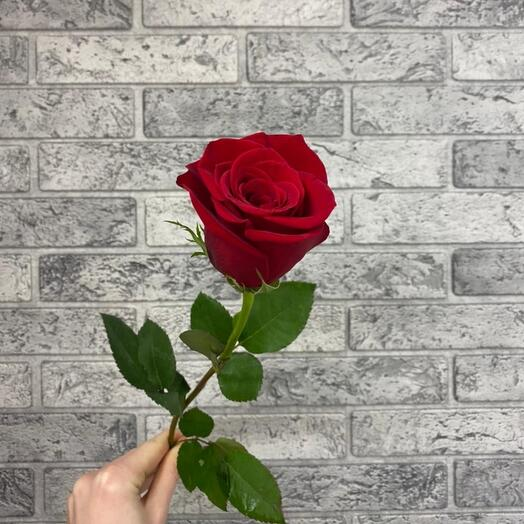 Роза VIP Premium Колумбия 40см
