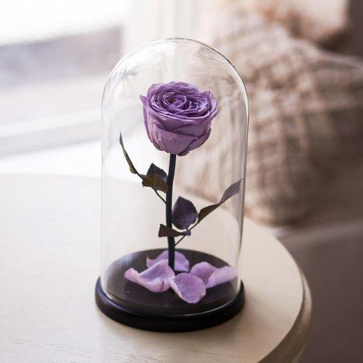 Роза в колбе Сиреневый: букеты цветов на заказ Flowwow