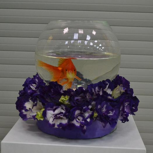 Purple Gold Fish: букеты цветов на заказ Flowwow