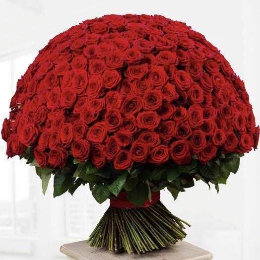 301 красная роза Премиум: букеты цветов на заказ Flowwow