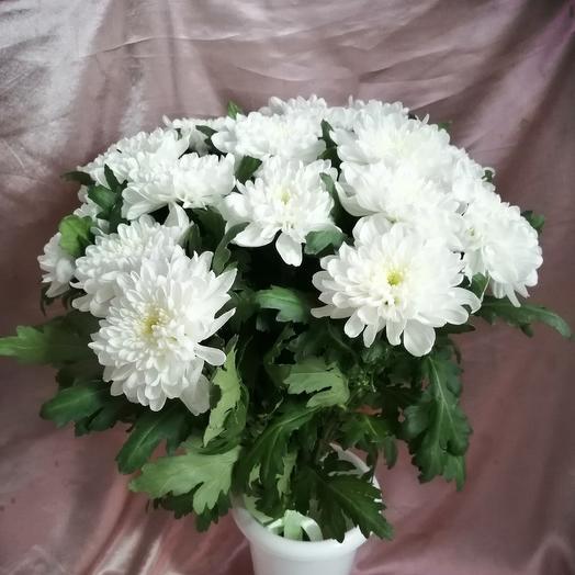 Моно букет из одноголовых хризантем: букеты цветов на заказ Flowwow