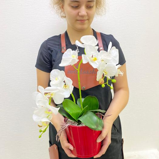 Двойная орхидея