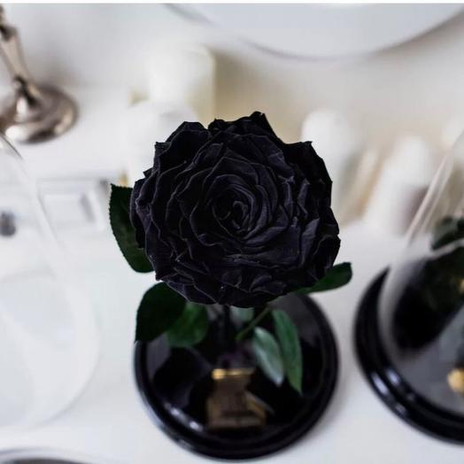 Чёрная роза в колбе
