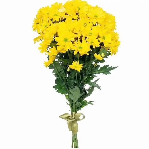 Желтая ромашковая хризантема