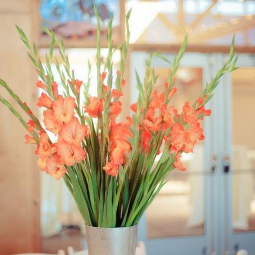 Гладиолусы персиковые: букеты цветов на заказ Flowwow