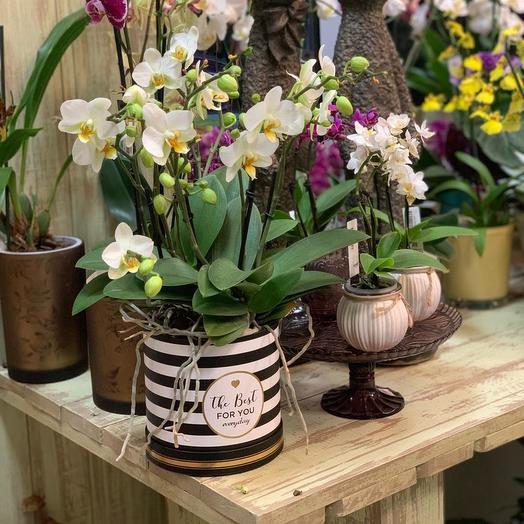 Пышная орхидея в шляпной коробке: букеты цветов на заказ Flowwow