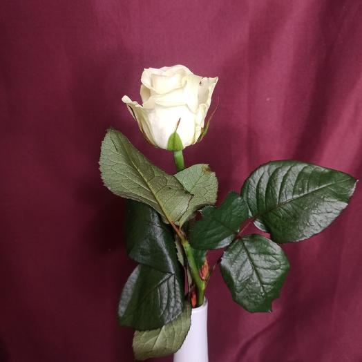 Роза местная