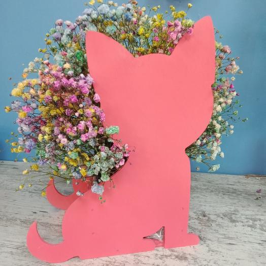 Котик с радужной гипсофилой